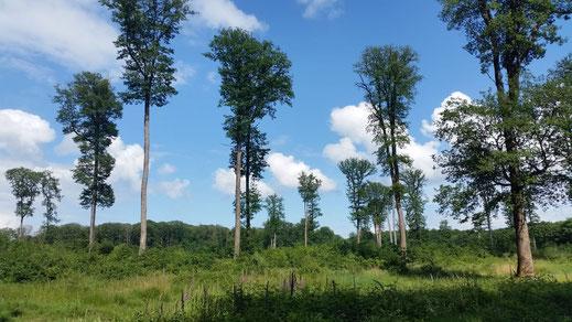 Waldfläche im Parc Naturel Régional du Perche.