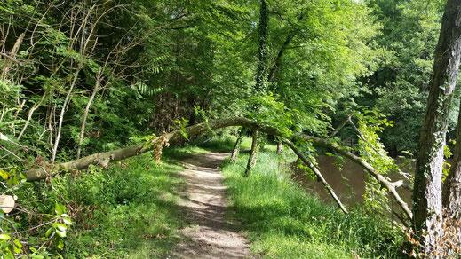 Wanderweg am Etang de la Herse in der Orne, Basse-Normandie, Frankreich
