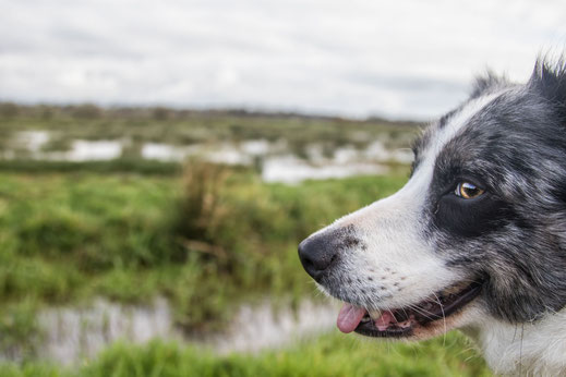 Plessis-Lastelle, Marais, Wanderung, Hund, Normandie