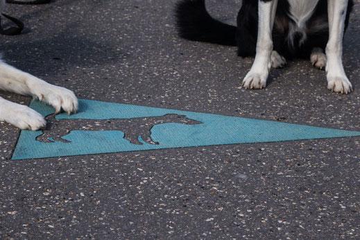 Le Havre, Normandie mit Hund