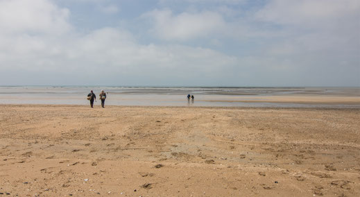 Pêche-a-Pied in Annoville-Plage in der Normandie