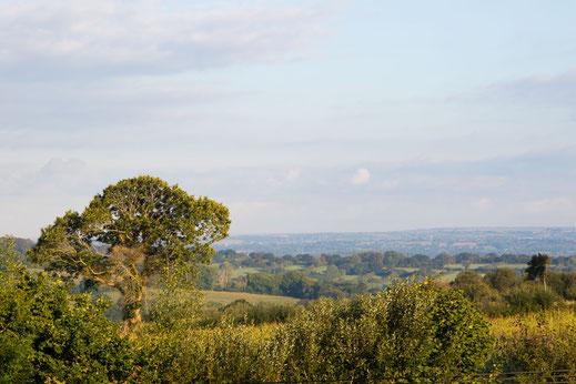 Aussicht auf den Cotentin von der Luftwaffenstation K10 Knickebein in Sortosville-en-Beaumont.