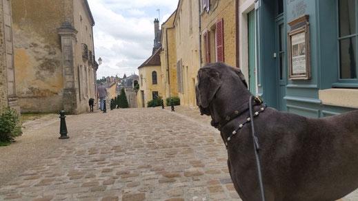 Eine Deutsche Dogge in den Gassen von Bellême