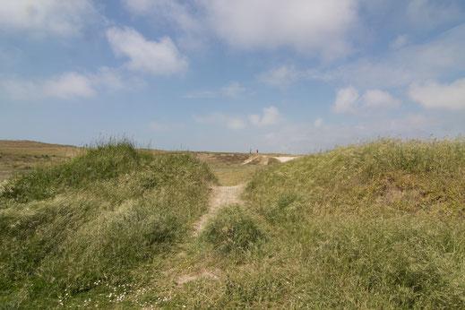 Dünengebiet von Briqueville-sur-Mer in der Normandie