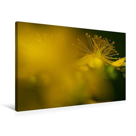 Valerie Forster, Foto-Leinwand, Calvendo, Gelbes Leuchten