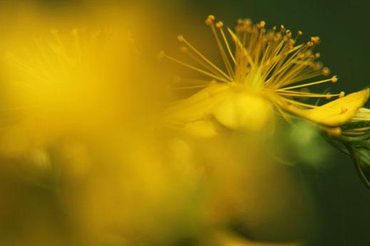 Valerie Forster, Liebe zur Natur, Blume