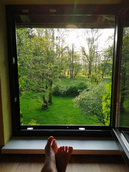 Blick aus dem Fenster auf Bäume und Wiesen.