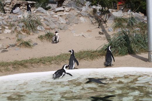 Tierpark Euregiozoo Aachen