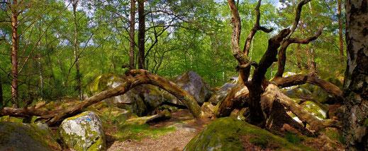 Gorges d'Apremont - Forêt de Fontainebleau - France