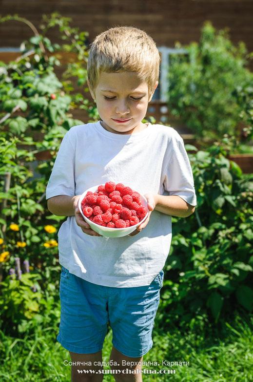 Органічні ягоди з нашого саду: малина, ожина, смородина. Сонячна садиба, Верховина, Карпати.