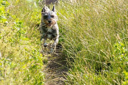 Hund Natur Portrait Vierbeiner Tierporträt