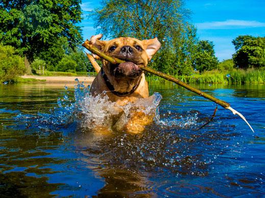 Hund im Wasser in der Natur