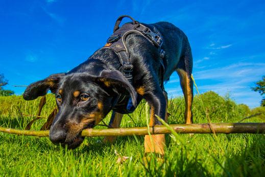 Hund und Halter, beste Freunde