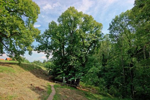 Tassilolinde bei Wessobrunn