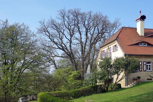 Eiche bei Schloss Nagel