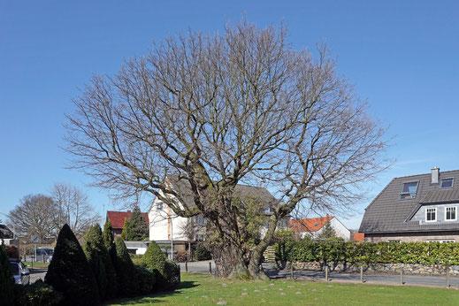 Hohle Eiche in Egenbüttel