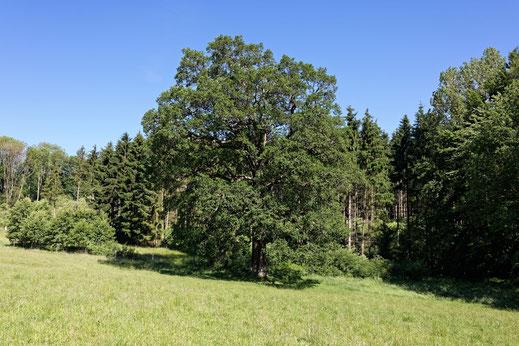 Brockhausen (BHU: 6,00 m)