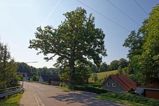 Eiche bei Karlstein