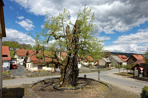 Dorflinde in Haselbach