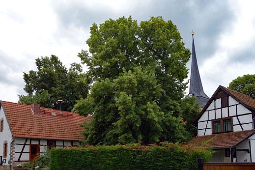 Linde in Alterstedt