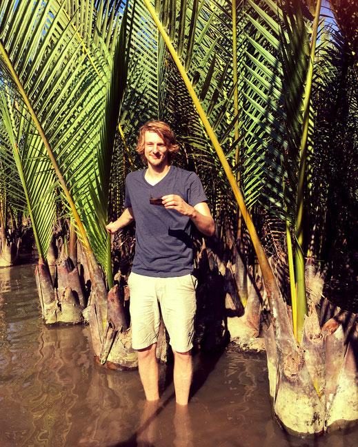 Nypa fruticans in den Mangroven von Hoi An (Vietnam)