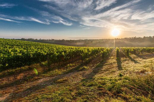 Wein- und Gourmetreise in Südafrika. Kleingruppenreisen
