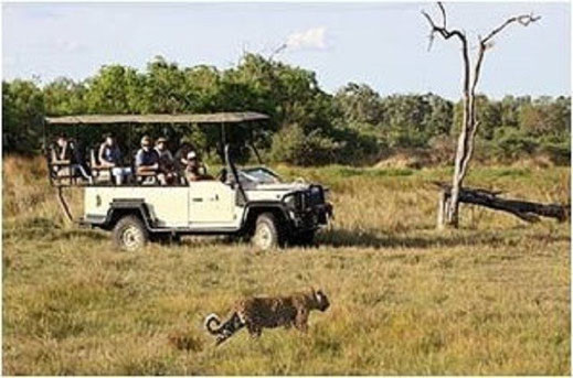 Safari mit der Familie Südafrika