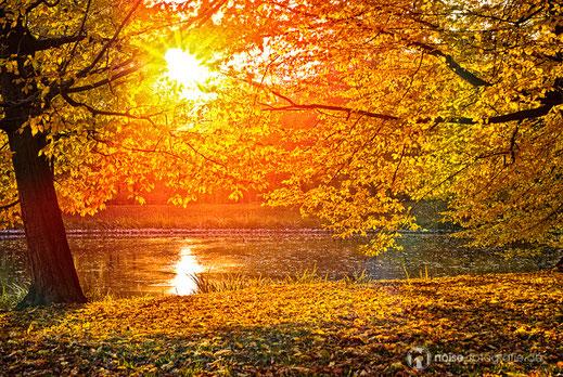 Herzoglicher Park in Gotha - Herbststimmung