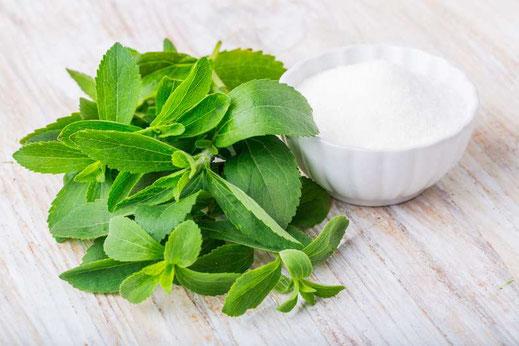 Die Stevia Pflanze