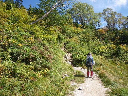 黄葉が進む小遠見山付近