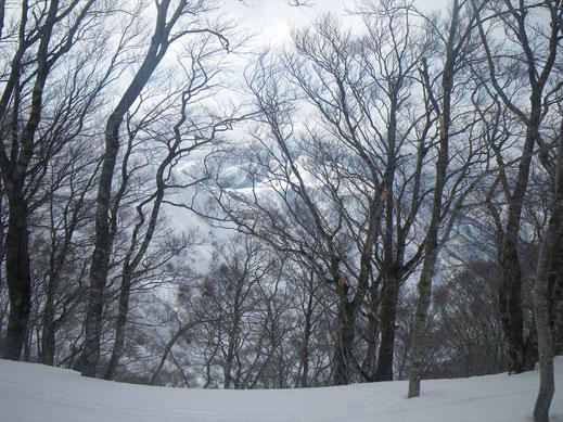 樹間から見える部子山方面。いいブナ林です。