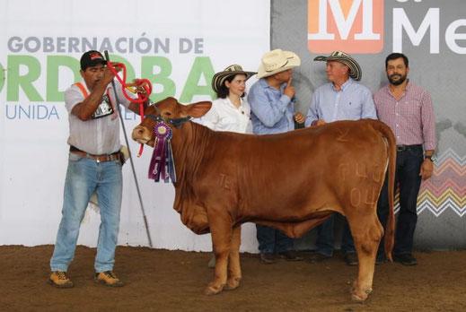 Campeona intermedia 740-04 Guamito Danna