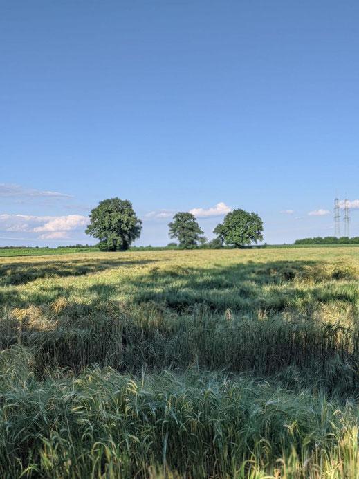 Sommerfeld hinter dem Hof
