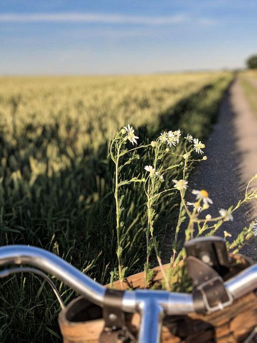 Mit dem Rad durch die Sommer Felder.