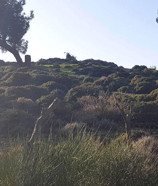 Auf Ikaria wachsen über 2600 verschiedene Kräuterarten.