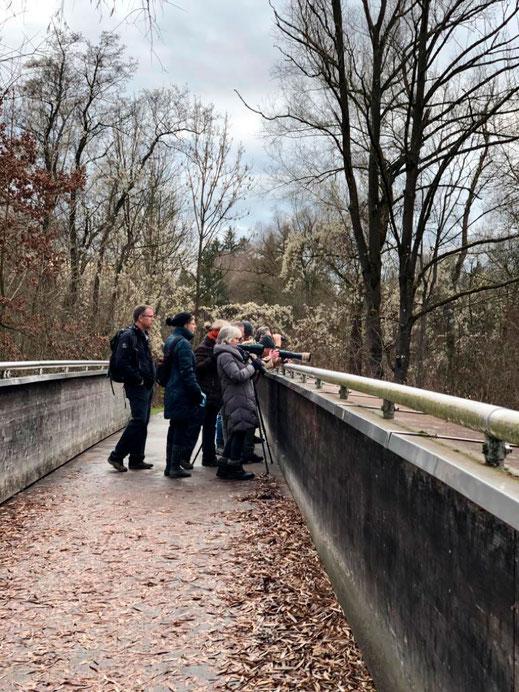 Vogelführung Dachau Amper