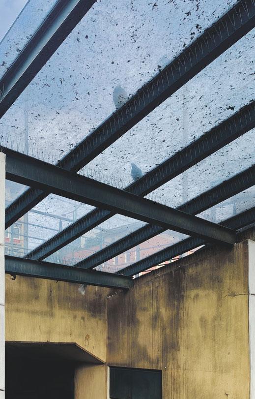 Die schweren Schäden, die beim Brand des U-Bahnhofs Wiener Platz entstanden sind, hat die KVB nicht sanieren lassen. Ein Heim für Tauben sind die Glasdächer und Absätze in der Unterführung.