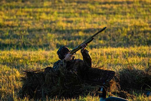 Gänsejagd - viele Möglichkeiten zum Jagderfolg