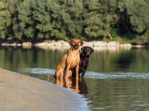 Jackpot of eleven creek und scooby doo sind beides ausgebildete Jagdhunde