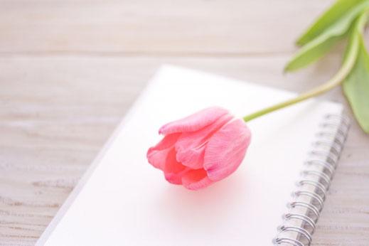 リングノートのうえに置かれた一輪のピンクのチューリップ。