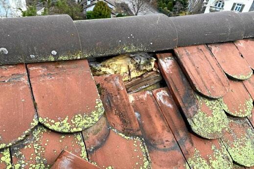 Kleinere Reparaturen an Ihrem Hausdach und Dachrinnen