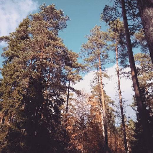 forêt stockholm archipel arbre