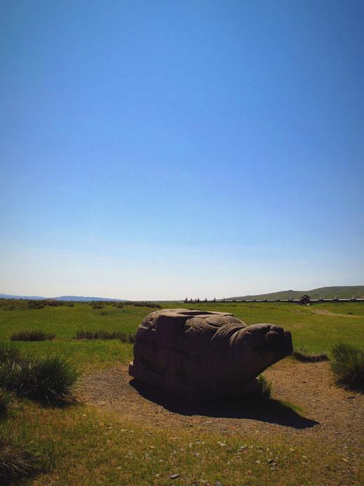 mongolie bigousteppes tortue kharkhorin