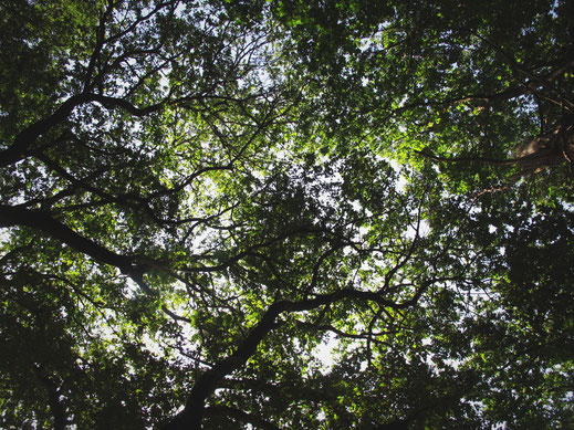 bigousteppes espagne euskai arbres