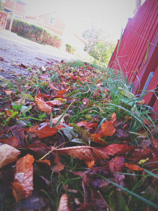 suède bigousteppes vaxholm feuilles mortes rouge bois orange