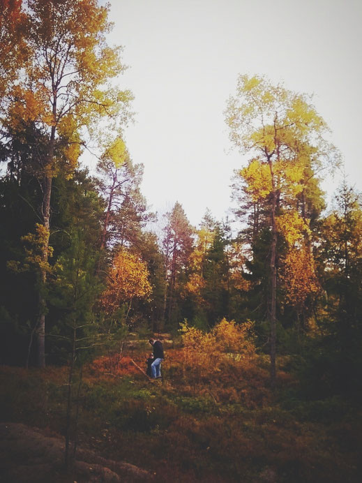 suède bigousteppes automne feuille rouge orange jaune arbres forêt