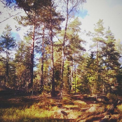suède forêt archipel arbre ciel bleu