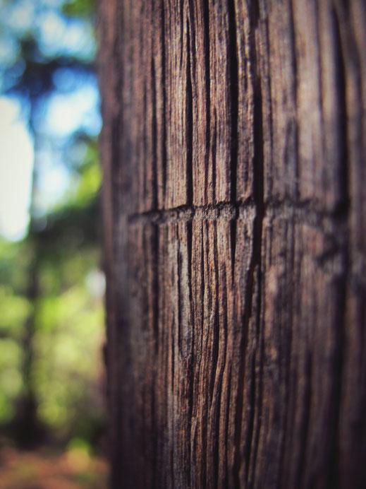 bigousteppes bois arbre forêt