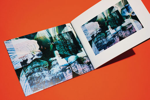 Bild&Grafik Sinsheim Bild & Grafik Bild und Grafik Mediengestaltung Print Design Artwork Fotografie Fotograf