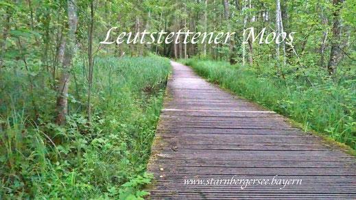 Leutstettener Moos Starnbergersee in Bayern